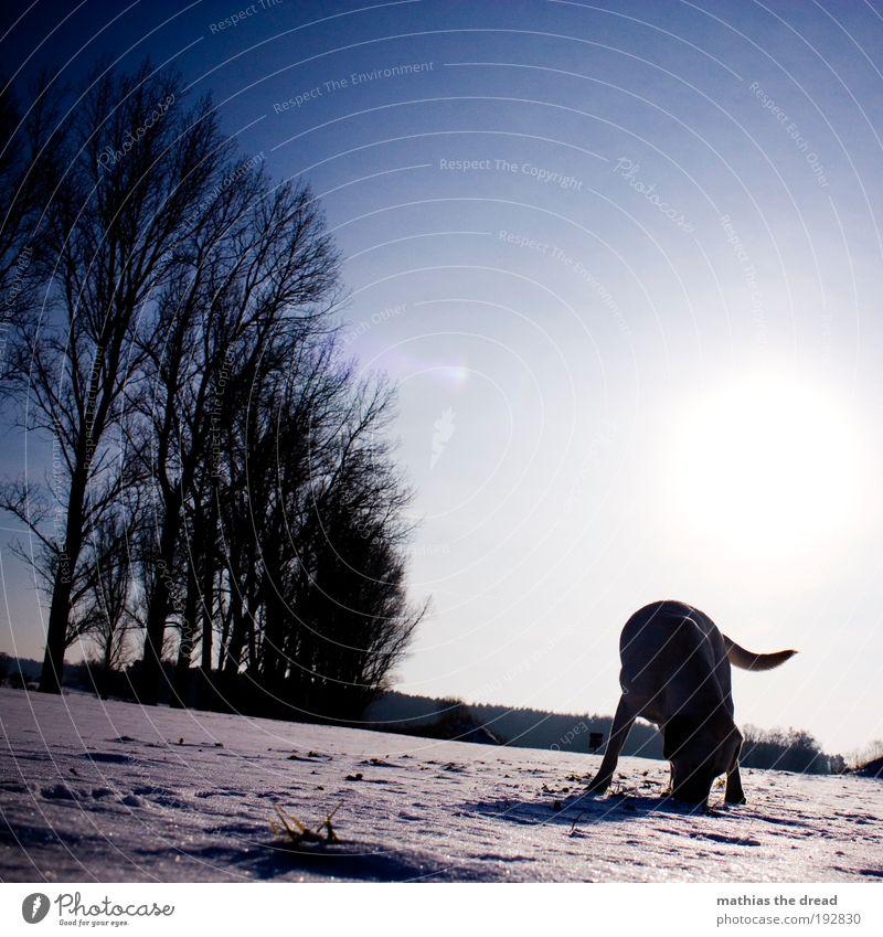 SCHNÜFFEL SCHNÜFFEL Natur weiß Sonne Pflanze Winter Tier kalt Schnee Wiese Freiheit Hund Landschaft Eis hell Feld Umwelt
