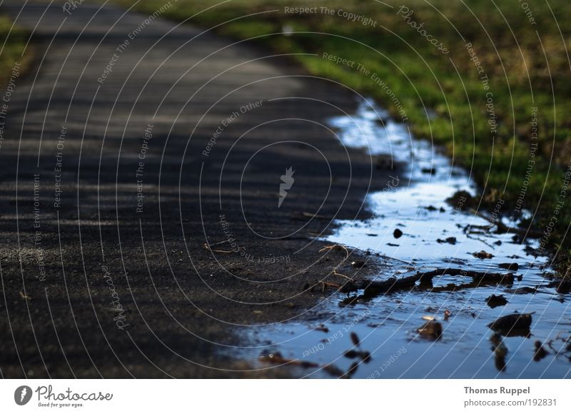 Wasserrand Natur grün Pflanze Wiese grau Wege & Pfade Feld Umwelt Verkehrswege Pfütze Reflexion & Spiegelung