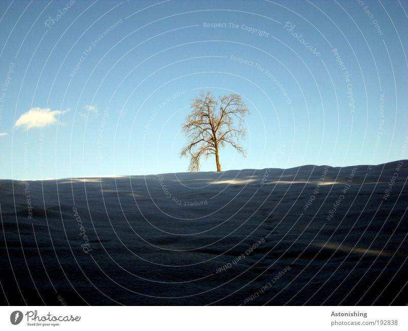 einsamer Baum mit Wolke Umwelt Natur Landschaft Pflanze Wasser Himmel Wolken Winter Wetter Schönes Wetter Eis Frost Schnee Hügel stehen Wachstum blau grau