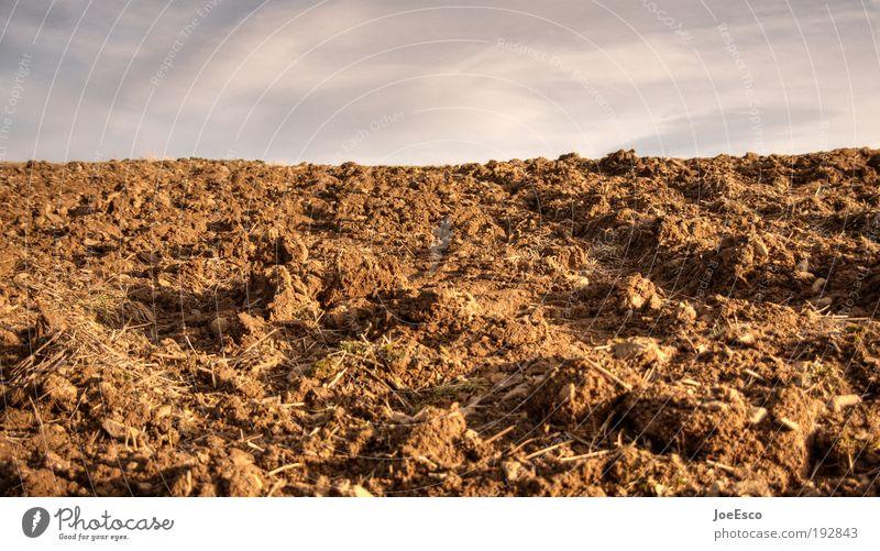 mutterboden Natur schön Landschaft Wärme Horizont Erde Kraft Feld authentisch Wachstum Perspektive Zukunft Urelemente Vergänglichkeit Landwirtschaft Beruf