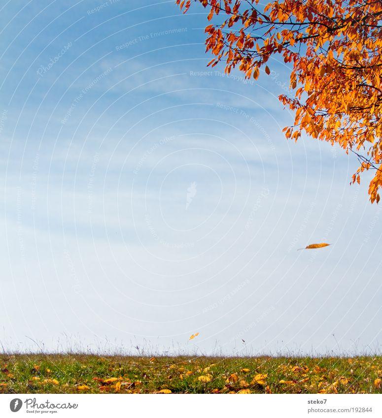 abblättern alt Himmel Baum grün blau ruhig Blatt gelb Herbst Wiese Park Landschaft gold Wandel & Veränderung fallen Vergänglichkeit