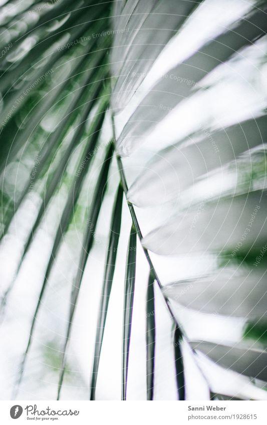 Palm Leaf 01 Natur Pflanze Tier Blatt Grünpflanze exotisch Urwald grün weiß Farbfoto Innenaufnahme Nahaufnahme Detailaufnahme Muster Strukturen & Formen Tag