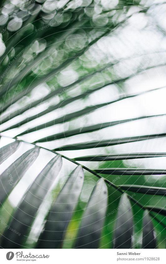 Palm Leaf 02 Natur Pflanze grün weiß Baum Tier ästhetisch exotisch Urwald