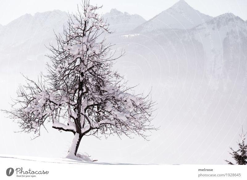 Natur verbunden Landschaft Himmel Sonnenlicht Winter Schönes Wetter Eis Frost Schnee Baum Ast Zweige u. Äste Berge u. Gebirge Naturliebe einzelner Baum