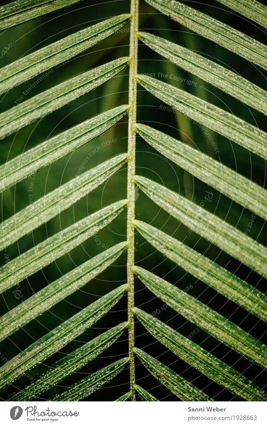 Palm Leaf 04 Natur Pflanze Tier Baum Blatt Grünpflanze exotisch Urwald grün schwarz Farbfoto Innenaufnahme Nahaufnahme Detailaufnahme Menschenleer Tag Licht