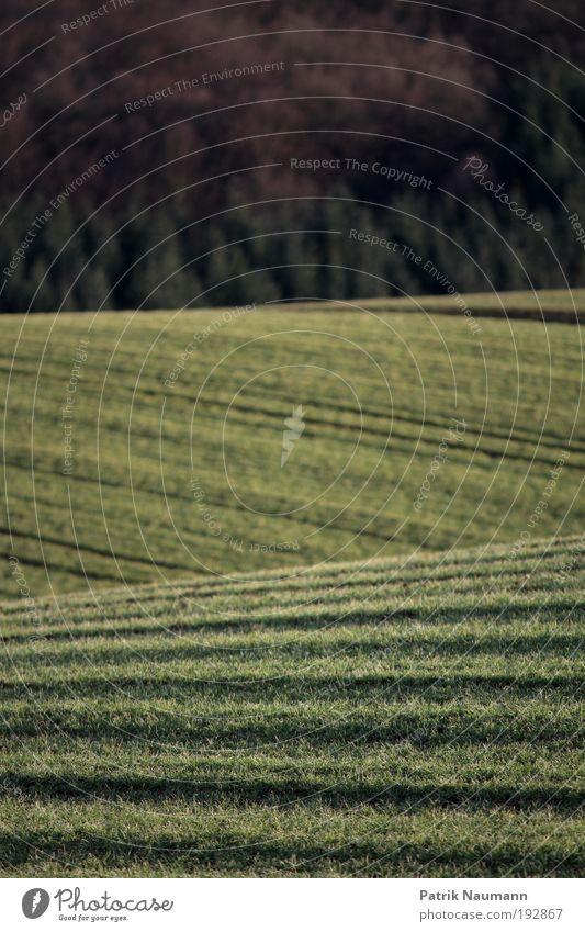 Ackerlandschaft Natur grün Ferien & Urlaub & Reisen Ferne Gras Berge u. Gebirge Freiheit Landschaft Linie Feld Umwelt Erfolg Horizont Erde ästhetisch Ziel