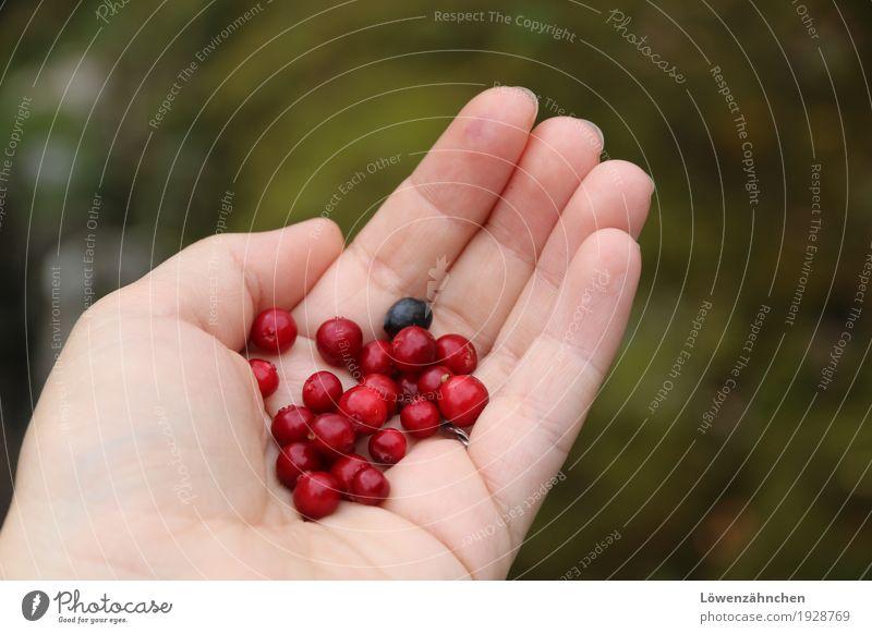 Jäger und Sammler... Natur blau grün Gesunde Ernährung Hand rot Erholung ruhig natürlich klein wild frisch authentisch genießen Finger Abenteuer