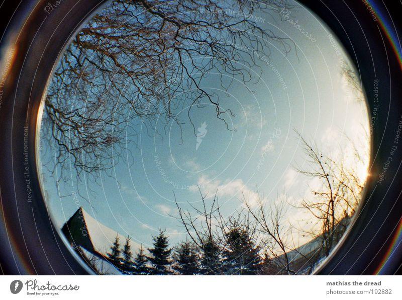 EINER DER WENIGEN SONNIGEN TAGE Umwelt Natur Landschaft Wolkenloser Himmel Sonnenaufgang Sonnenuntergang Winter Schönes Wetter Eis Frost Schnee Pflanze Baum