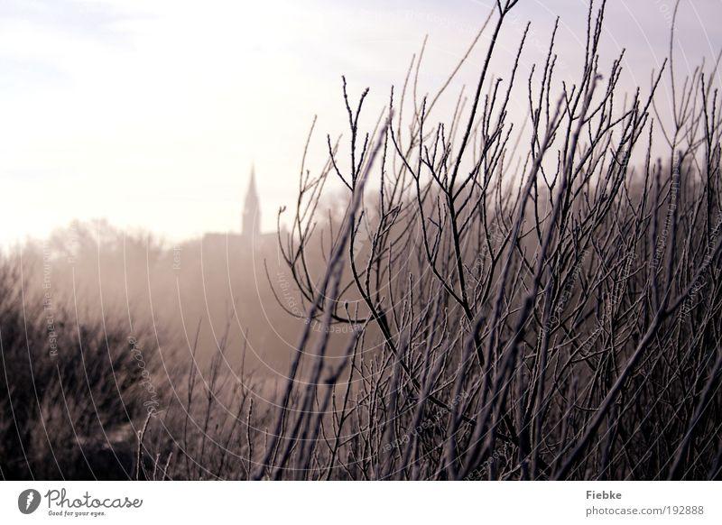Eiszeit Umwelt Natur Frost Schnee Pflanze Baum Sträucher Dorf Kirche Erholung kalt nass trist weiß ruhig Einsamkeit Stimmung träumen Winter Spaziergang Nebel