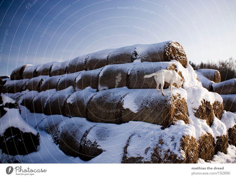 ABENTEUERSPIELPLATZ Natur schön Freude Winter Tier kalt Schnee Wiese springen Spielen Hund Landschaft Feld Umwelt frisch Klettern