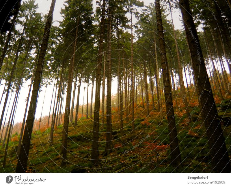 Nordreisender Natur Baum Pflanze Ferien & Urlaub & Reisen ruhig Ferne Wald Erholung Leben Wiese Freiheit Berge u. Gebirge Landschaft Umwelt Zufriedenheit