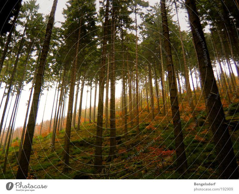 Nordreisender Natur Baum Pflanze Ferien & Urlaub & Reisen ruhig Ferne Wald Erholung Leben Wiese Freiheit Berge u. Gebirge Landschaft Umwelt Zufriedenheit Freizeit & Hobby