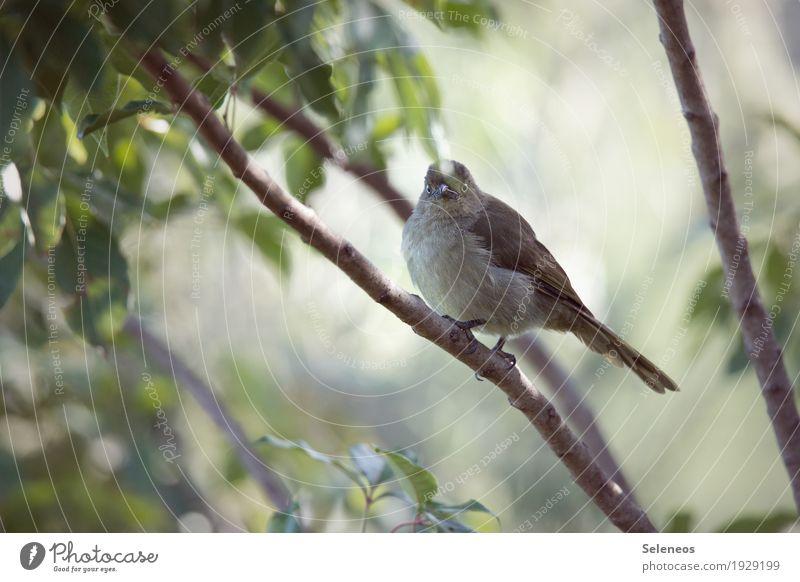 Sombre Greenbul Natur Pflanze Sommer Baum Blatt Tier Wald Umwelt klein Freiheit Vogel Wildtier Flügel beobachten nah Tiergesicht