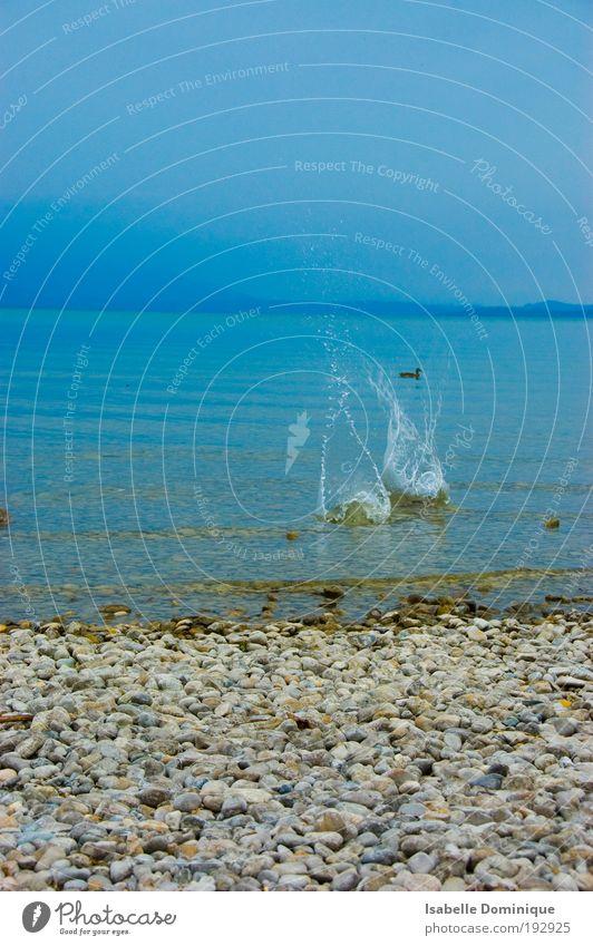 Natur Wasser schön Himmel blau Sommer Tier Berge u. Gebirge Bewegung träumen See Vogel Küste warten Nebel Wassertropfen
