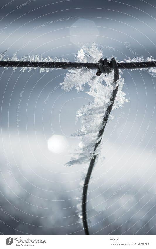Prima Klima l eiskalt umschlungen Natur ruhig Winter Leben Zufriedenheit Eis elegant einzigartig Vergänglichkeit Hoffnung Frost festhalten harmonisch