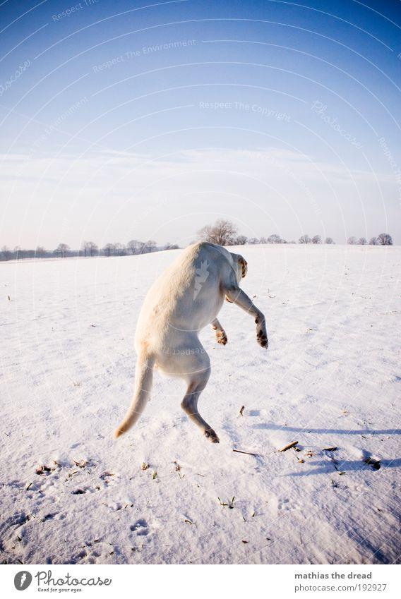 FLYING DOG Himmel Natur Winter Tier kalt Wiese Schnee Spielen Freiheit Landschaft Umwelt springen Bewegung lachen Hund lustig
