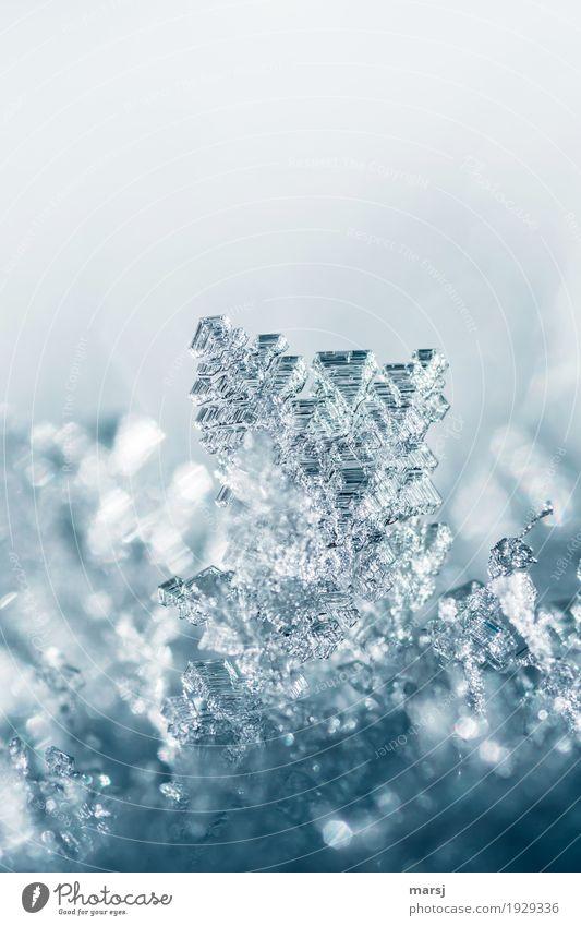 Nur in einem | prima Klima | wachsen diese Kristalle Natur ruhig Winter kalt Leben Herbst Schnee klein außergewöhnlich leuchten glänzend Eis elegant ästhetisch