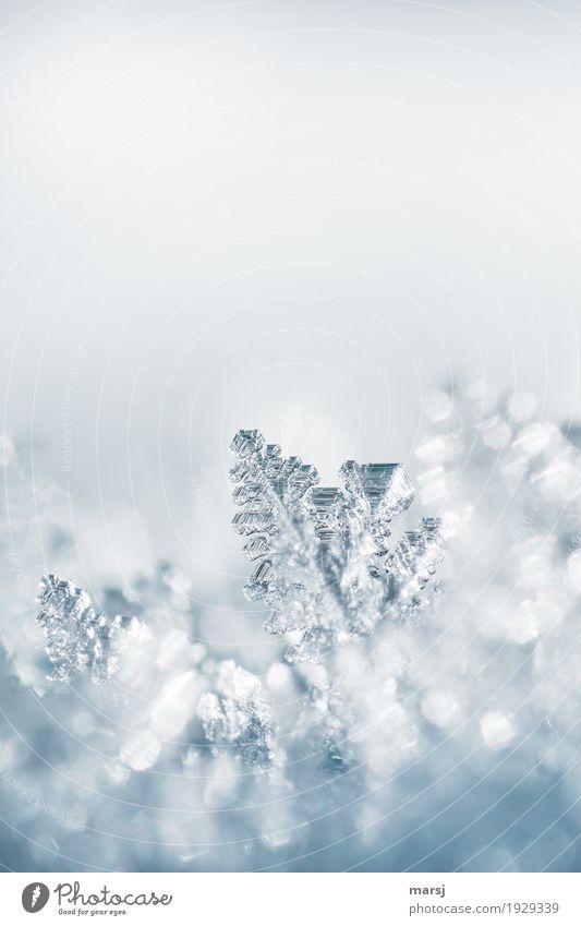 Kristallklar Natur Winter kalt Leben Schnee außergewöhnlich Zufriedenheit Eis authentisch einzigartig Frost harmonisch dünn Kristallstrukturen Eiskristall
