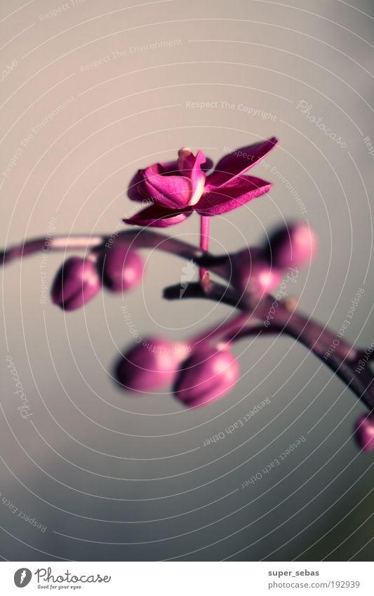 orchidaceae schön Blume Pflanze Blüte Blühend Orchidee