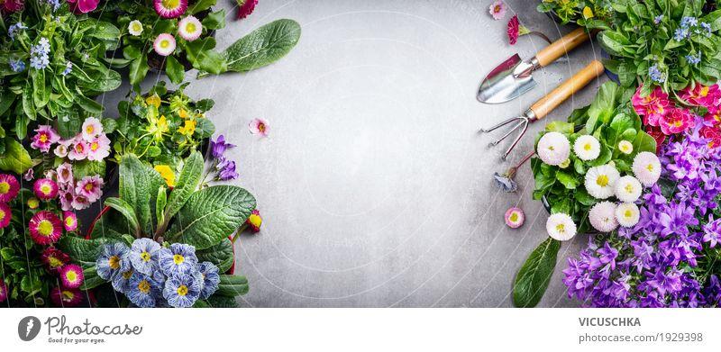 Hintergrund mit bunten Gartenblumen und Gartengeräte Natur Pflanze Sommer Blume Blatt gelb Blüte Frühling Hintergrundbild Stil Design retro Blühend Fahne