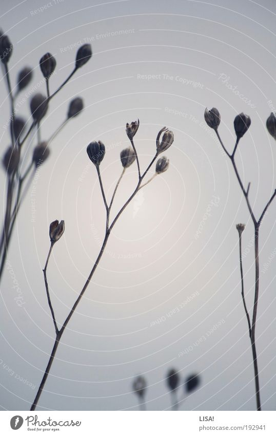 untitled IV Natur Landschaft Pflanze Wasser Winter Eis Frost Schnee Gras Sträucher Wildpflanze Wiese Feld ästhetisch elegant kalt trist trocken blau braun grau