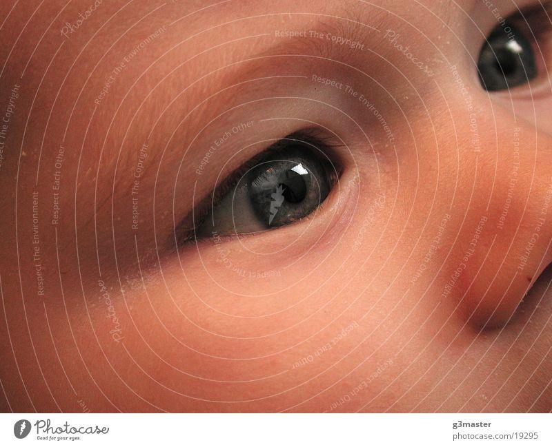 Klarer Blick Kind Reflexion & Spiegelung Porträt Augenbraue Nase Makroaufnahme Haut Gesicht Detailaufnahme feine Härchen
