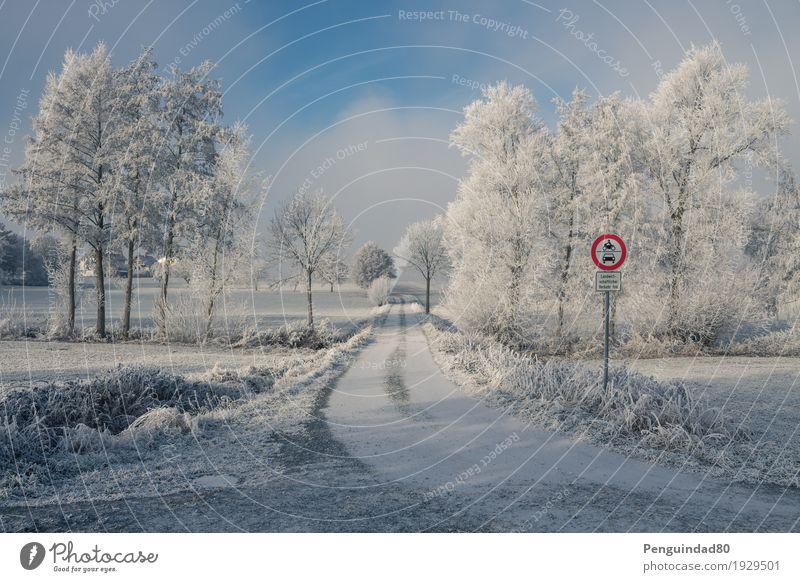 Color pop... Ferien & Urlaub & Reisen Ausflug Ferne Winter Schnee Natur Landschaft Himmel Wolken Wetter Schönes Wetter Eis Frost Baum Feld Malkes Deutschland