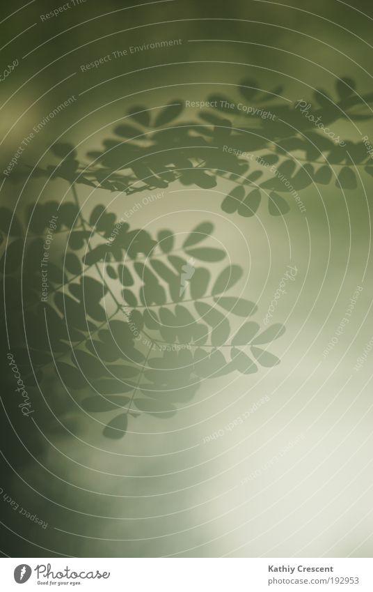 Ein hoffnungsvolles Schimmern Natur Pflanze Sonnenlicht Frühling Nebel Baum Sträucher Blatt Grünpflanze ästhetisch einfach weich grün weiß Frühlingsgefühle