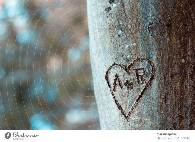 Herz Liebeserklärung Abenteuer Ferne Freiheit Berge u. Gebirge wandern Natur Pflanze Tier Sonne Herbst Baum Blatt Blüte Nutzpflanze Baumstamm Zeichen