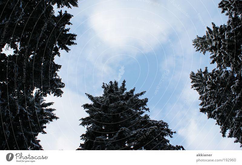 Riesen Umwelt Natur Pflanze Luft Himmel Wolken Winter Klima Klimawandel Wetter Schönes Wetter Eis Frost Schnee Baum Park Wald Coolness dunkel hell hoch kalt