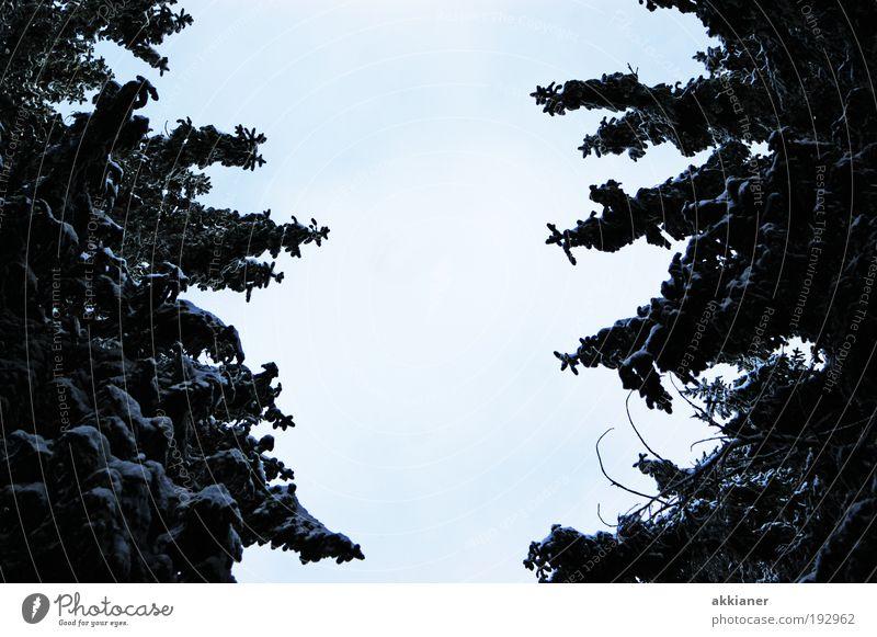 Mut zur Lücke Umwelt Natur Landschaft Pflanze Luft Winter Klima Klimawandel Wetter Schönes Wetter Eis Frost Schnee Baum Wald Coolness dunkel gigantisch groß