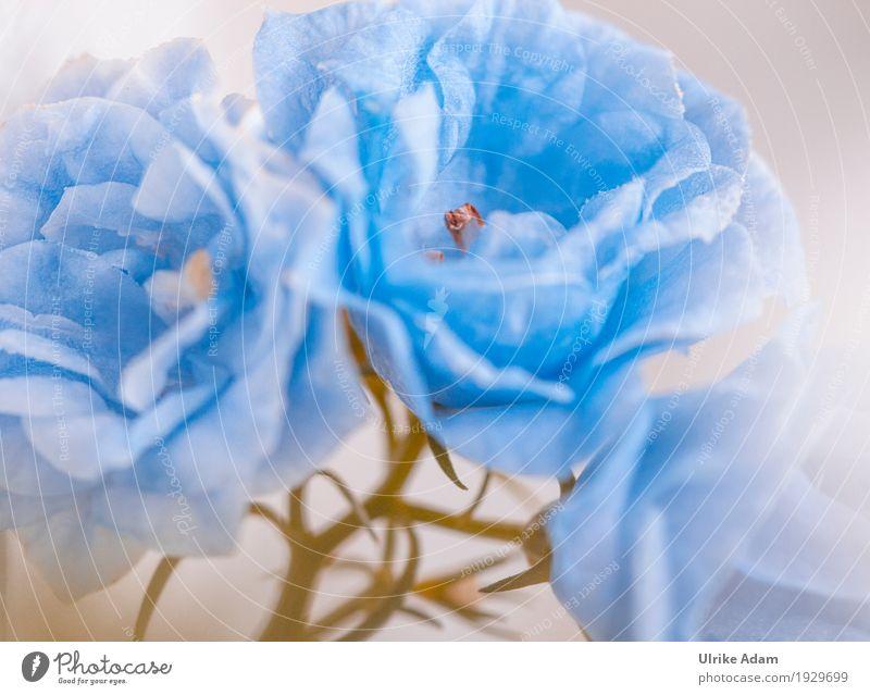 Gefüllte Sternglockenblume (Campanula Isophylla) elegant Dekoration & Verzierung Poster Bild Postkarte Kunst Kunstwerk Natur Pflanze Frühling Blume Blüte