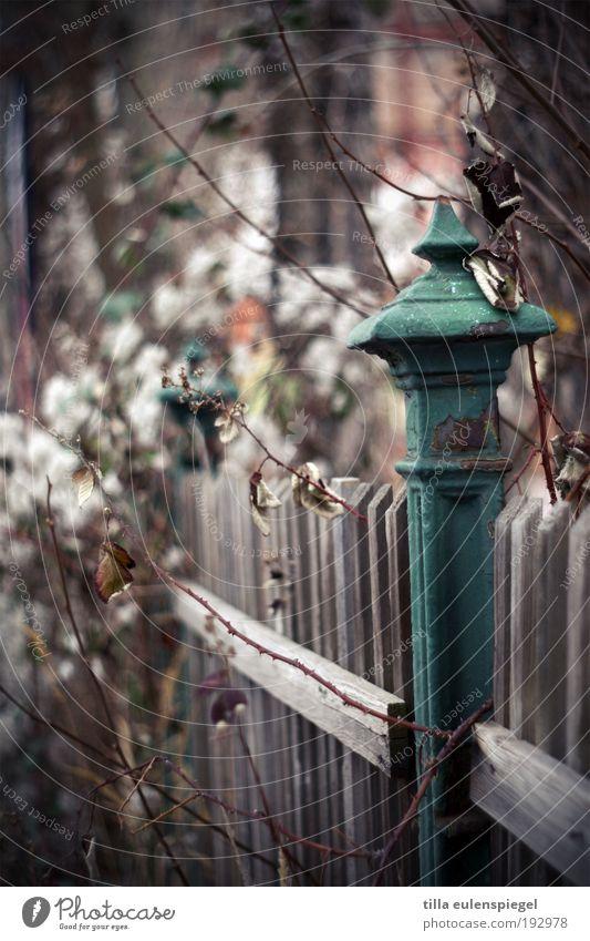 war einmal alt Pflanze Winter ruhig Einsamkeit Herbst Umwelt Holz Garten natürlich wild authentisch trist Wandel & Veränderung Sträucher Vergänglichkeit