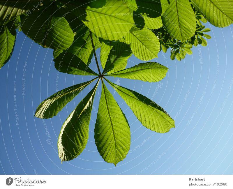 lenz. harmonisch Sommer Umwelt Natur Pflanze Himmel Sonnenlicht Frühling Schönes Wetter Baum Blatt grün Wachstum Kastanienbaum Kastanienblatt Frühlingsgefühle