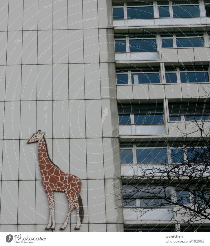 Hausbesetzung weiß Baum Tier dunkel Berlin Wand Fenster Gebäude Schilder & Markierungen groß Hochhaus ästhetisch Freizeit & Hobby Dekoration & Verzierung Zoo
