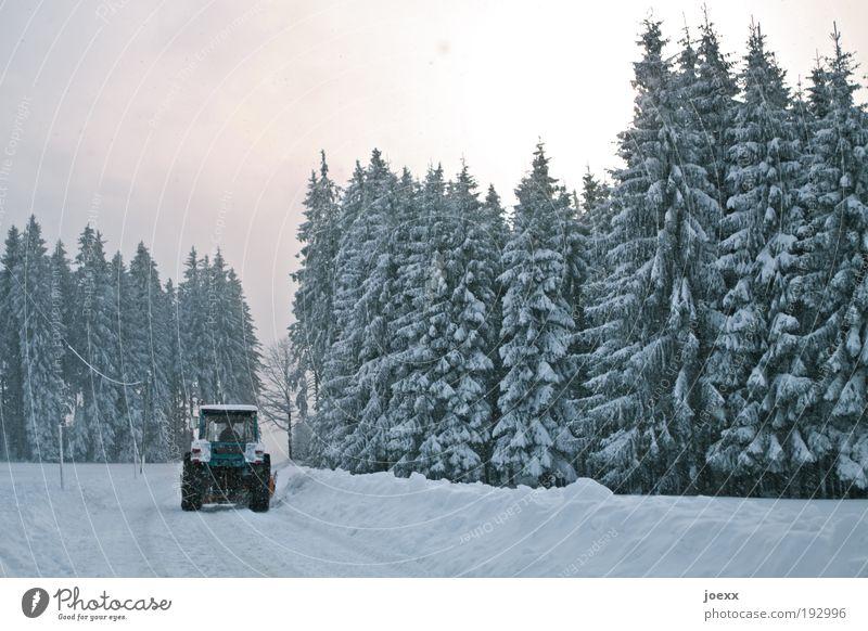 Abräumer Natur Himmel Winter Straße Wald kalt Schnee Arbeit & Erwerbstätigkeit Landschaft Wetter Umwelt fahren Landwirtschaft Schneelandschaft Traktor Ordnung