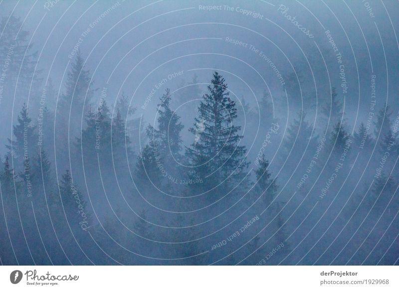 Nebelwald in Oberstdorf Ferien & Urlaub & Reisen Tourismus Ausflug Abenteuer Ferne Freiheit Berge u. Gebirge wandern Umwelt Natur Landschaft Pflanze Winter