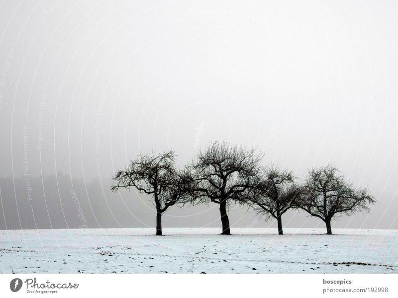 die einsamen vier Himmel weiß Baum blau Winter Einsamkeit kalt Schnee grau Landschaft Eis Feld Nebel Umwelt Frost Frieden