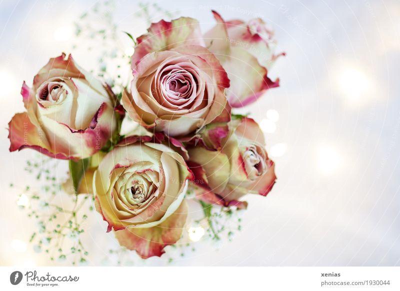 Rosenstrauß mit Lichtpunkten schön weiß rot Blüte rosa hell Dekoration & Verzierung Geburtstag Lebensfreude Hochzeit Blumenstrauß Duft schenken Muttertag