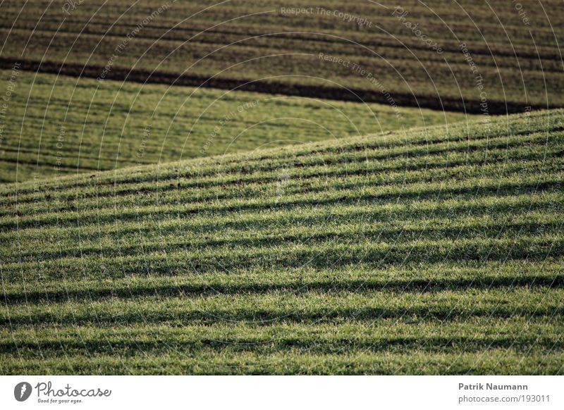 Landschaftslinien Sinnesorgane Erholung ruhig Ferne Freiheit Umwelt Natur Erde Klima Klimawandel Gras Feld Frühlingsgefühle Tatkraft anstrengen Ende stagnierend