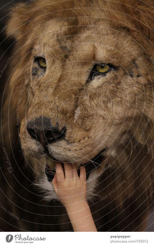 Fingerfood Mensch Kind alt Tier Ernährung Tod Katze Kindheit Arme groß Wildtier berühren Zoo Kleinkind Ferien & Urlaub & Reisen Theaterschauspiel