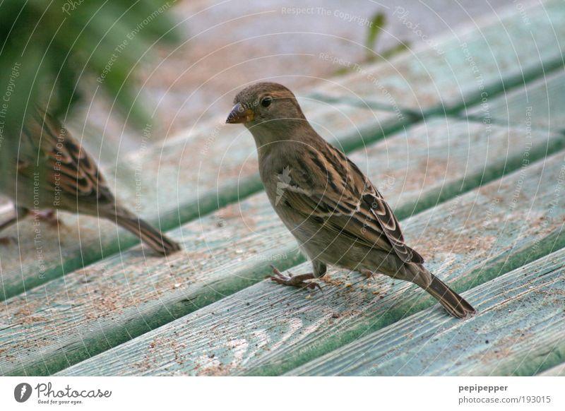 Schulterblick Natur Tier Garten Holz Park Sand Vogel
