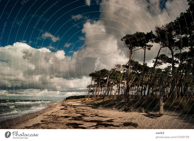 Beach Boys Freiheit Umwelt Natur Landschaft Pflanze Wasser Himmel Wolken Horizont Herbst Klima Schönes Wetter Wind Sturm Baum Gras Wildpflanze Windflüchter