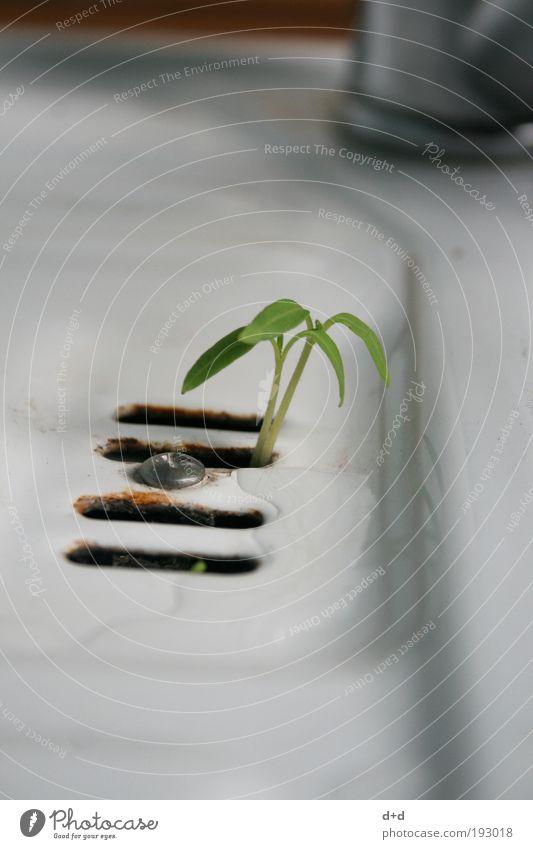 Y weiß grün Pflanze Blatt Gras Freiheit dreckig Erfolg Wachstum Sauberkeit Reinigen zart Symbole & Metaphern zierlich Abfluss Waschbecken