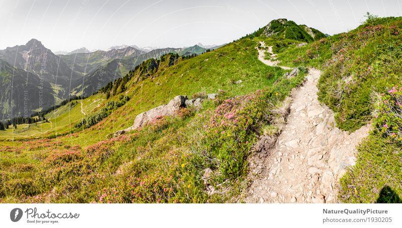 footpath in austria Himmel Natur Ferien & Urlaub & Reisen Pflanze Sommer Baum Landschaft Blume Erholung ruhig Ferne Berge u. Gebirge Wärme Leben Blüte