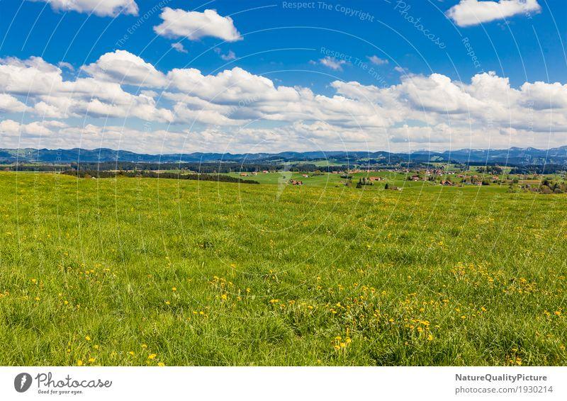 meadow in allgau Himmel Natur Ferien & Urlaub & Reisen Pflanze blau Sommer grün Baum Landschaft Blume Erholung Wolken ruhig Ferne Berge u. Gebirge Wärme