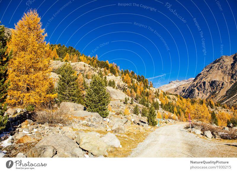 trail in engadine Himmel Natur Ferien & Urlaub & Reisen Pflanze Baum Landschaft Erholung ruhig Ferne Wald Berge u. Gebirge Wärme Umwelt Leben Herbst Schnee