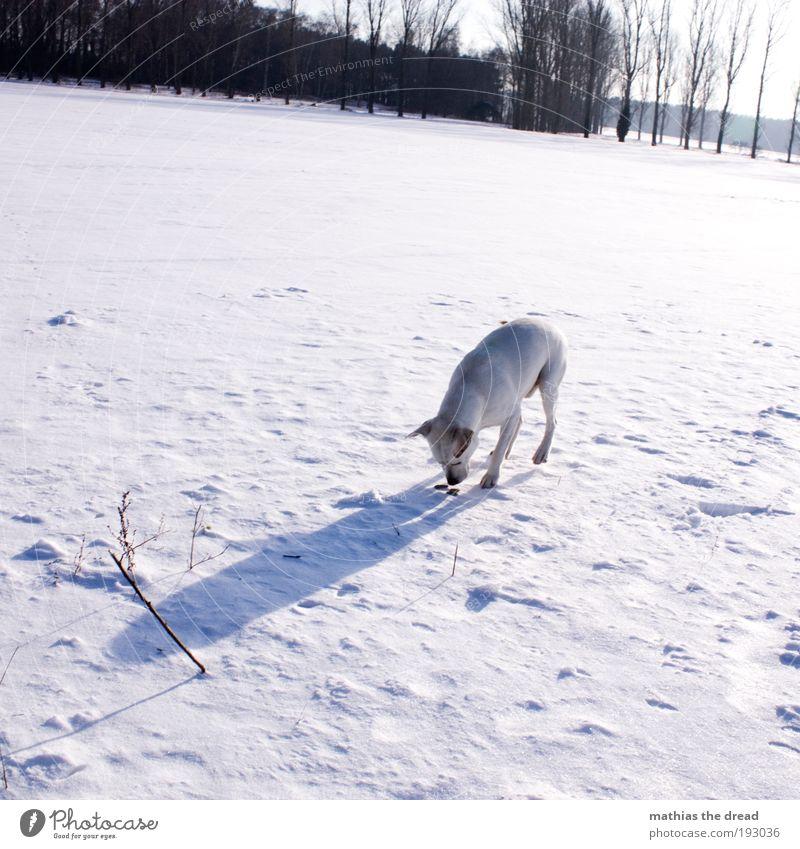 HAB WAS GEFUNDEN Umwelt Natur Landschaft Himmel Sonne Winter Schönes Wetter Eis Frost Schnee Baum Wiese Feld Tier Haustier Hund 1 kalt Geruch Spuren weiß