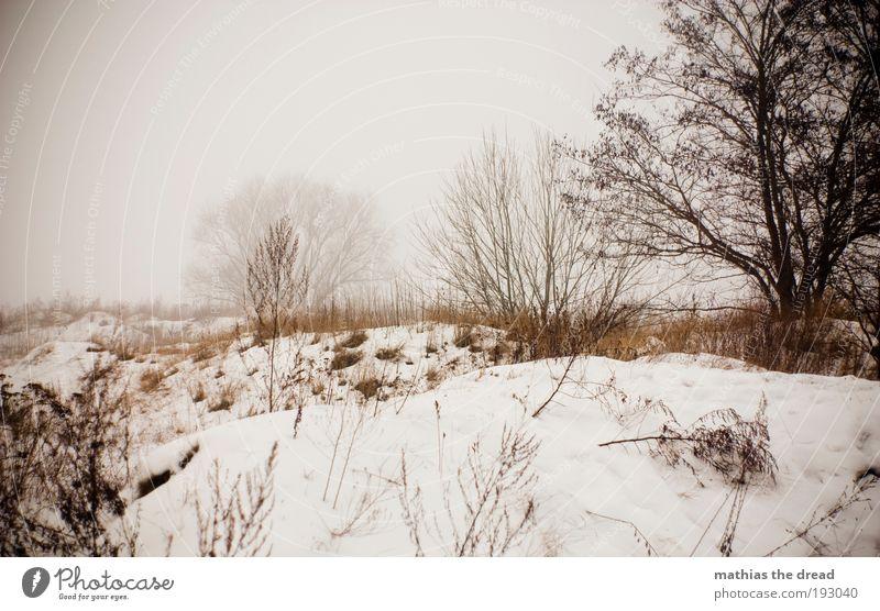 EIN GLÜCK IST ES VORBEI Natur Baum Pflanze Winter Wald dunkel kalt Schnee Wiese Gras Landschaft Eis Feld dreckig Nebel Umwelt