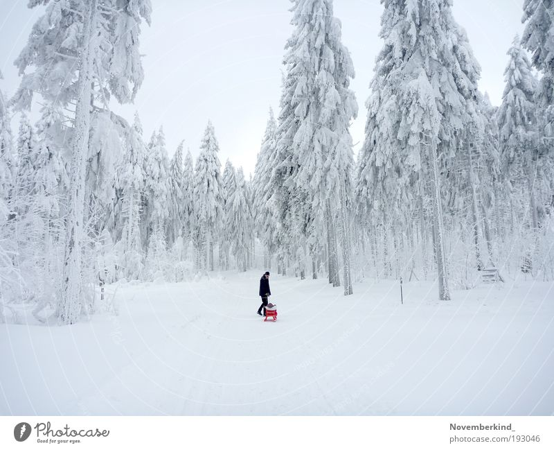 Natur Himmel weiß Baum Winter Wald Schnee Erholung Bewegung Landschaft Eis hell Stimmung Zusammensein glänzend gehen